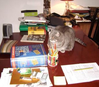 Gatta e dizionario
